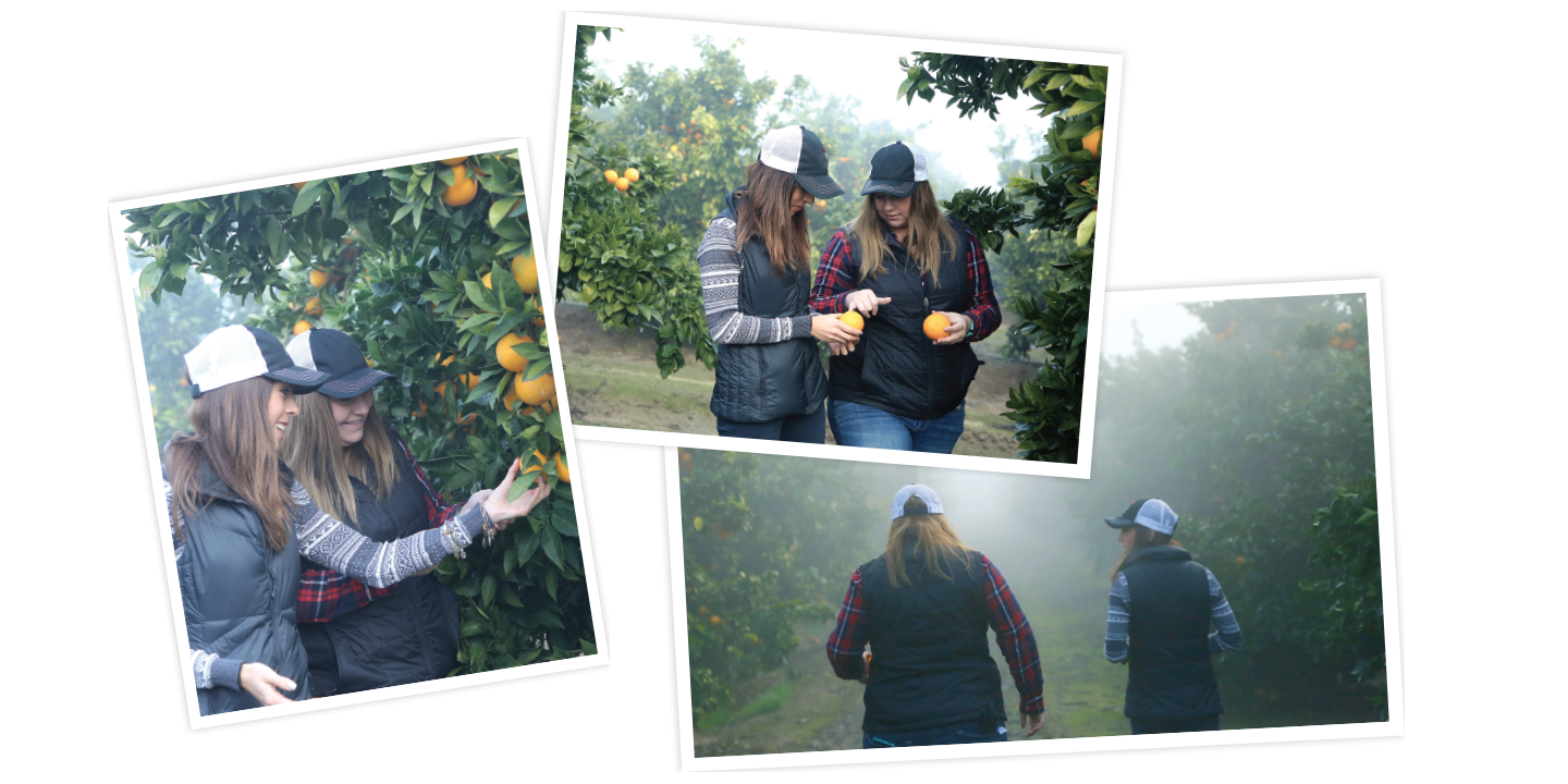 Monique Bienvenue (left), and Megan Stone (right), in the Bee Sweet Citrus orchards.