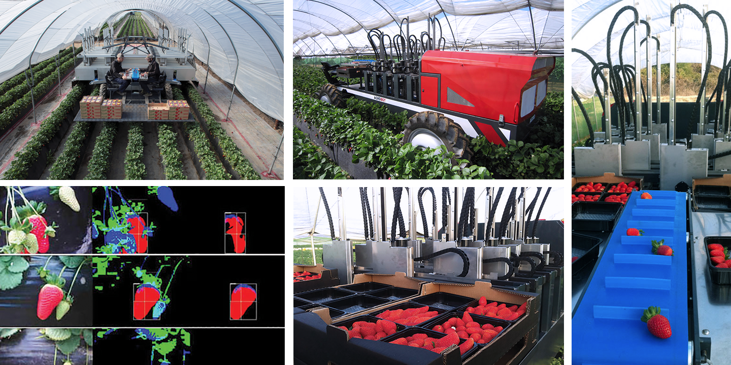 Driscoll's workers using Agrobot and Trays of harvested strawberries on Agrobot.