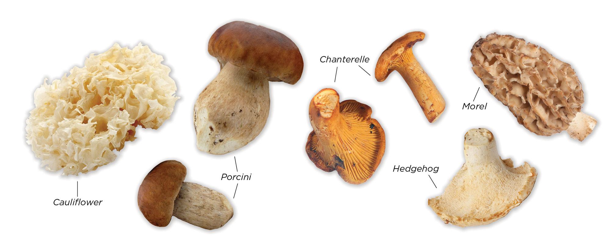 Varieties of mushroom