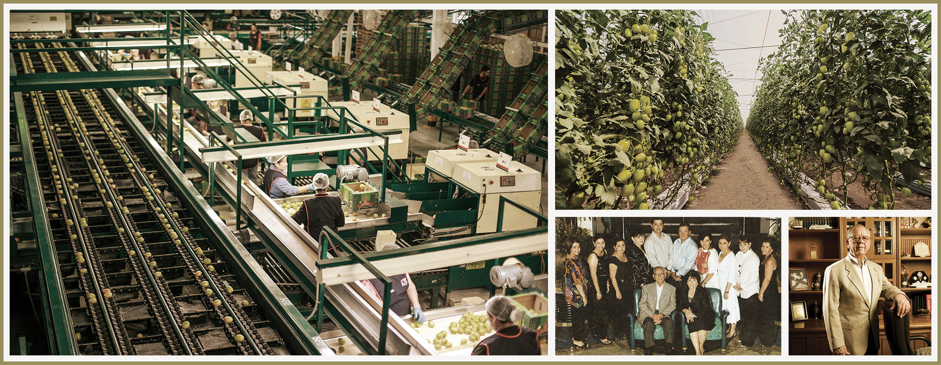 From left  (clockwise): Tomato packaging facilities in Mocorito Sinaloa; rows of tomato plants; Don Juan González Reyes in 2009; and  Juan González Reyes and family