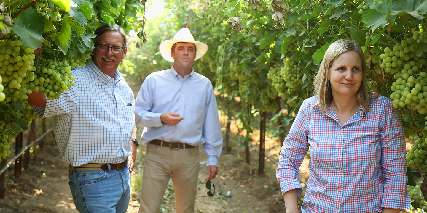 Max Jehle, Nathan Longcrier, and Melissa Heinrich in the vineyard