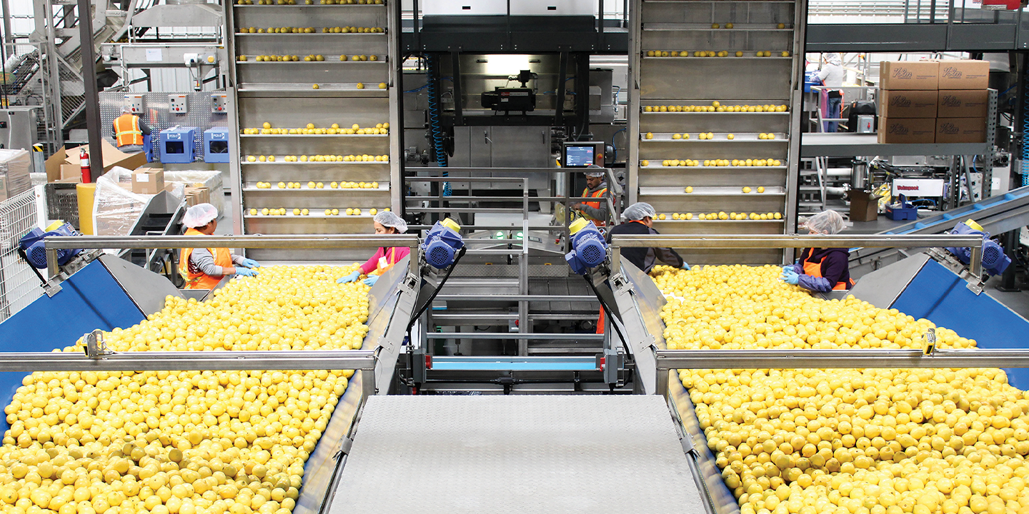 Innovative technologies allow the grower, shipper, and packer to pack its products more efficiently
