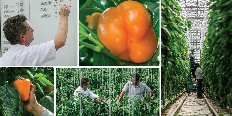 Freshmex's AgroPark greenhouse in Querétaro