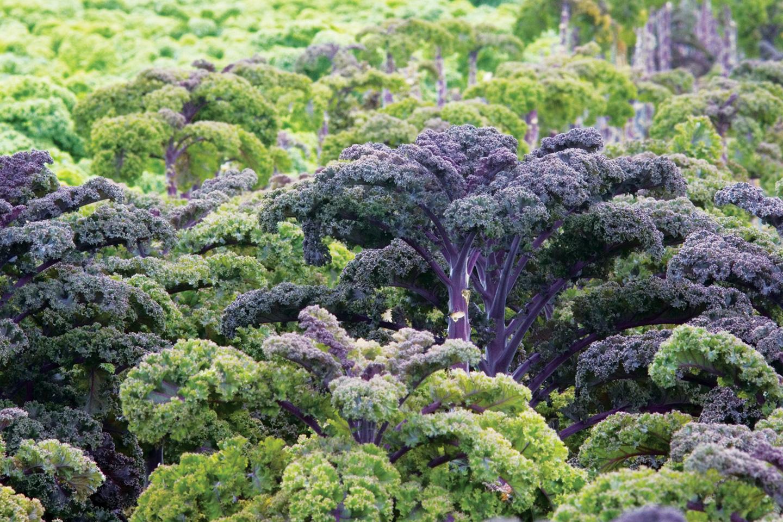 How Leafy Greens Became Super Greens