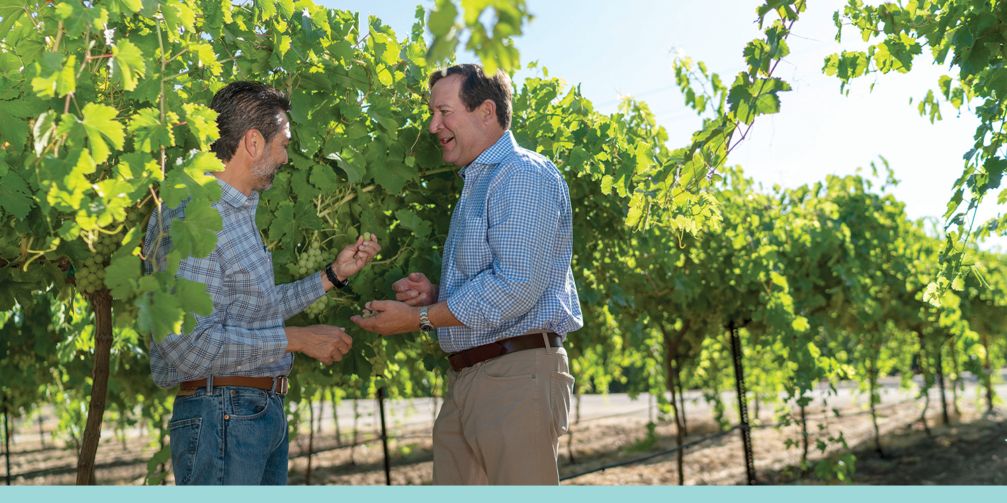 Luis Katsurayama and Jon Zaninovich in one of Jasmine Vineyards' vineyards