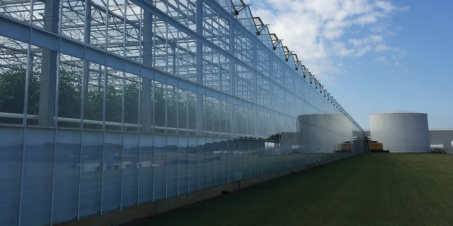 Greenhouse growing gives Red Sun Farms a leg up on sustainability initiatives