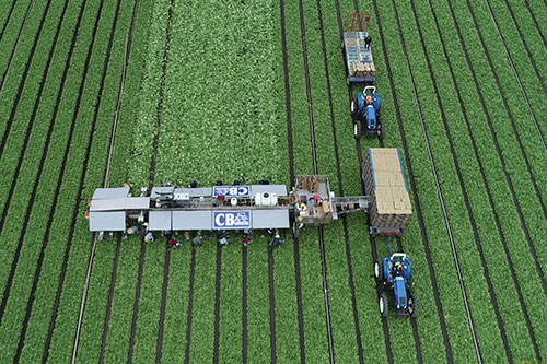 Harvesting innovation has always been a part of Church Brothers Farms' vision and business model