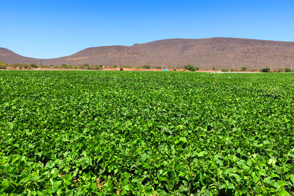 Culiacán, Mexico, is one of multiple growing regions 4Earth Farms has secured dependable acreage in