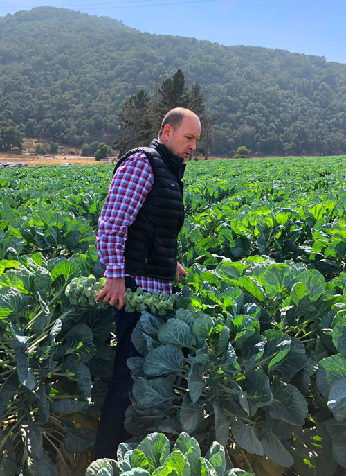 Dave Hewitt surveying a field of Brussels sprouts