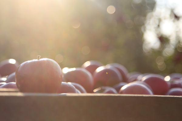 Crunch Time Apple Growers is more than just a grower-owned and operated collective—it's a team of trailblazers, visionaries, and thought-leaders constantly fulfilling the apple category's potential via innovation, sustainability, and more...