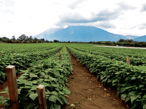 Crystal Valley is able to deliver on its year-round promise through grower partnerships and importing fresh fruit and vegetables from outside the U.S.