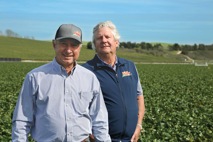 Tom Nunes, Jr. (left) and John Wilkinson (right) walking through a field that supplies their Foxy brand strawberries
