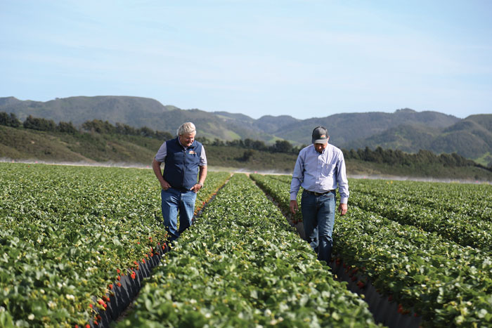 John Wilkinson (left) and Tom Nunes, Jr. (right) inspecting a strawberry field in Santa Maria, Ca