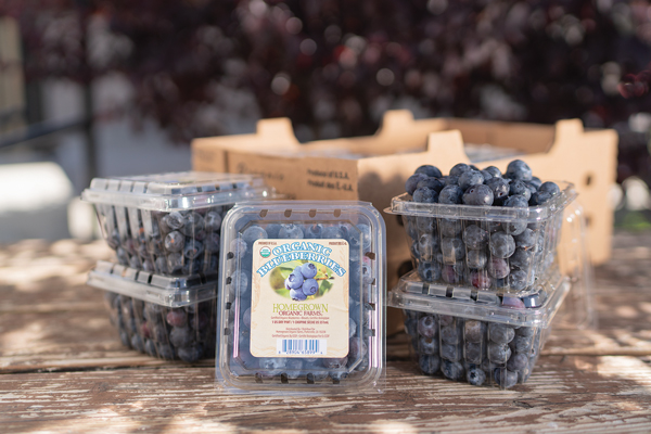 Packaged Homegrown Organic Blueberries