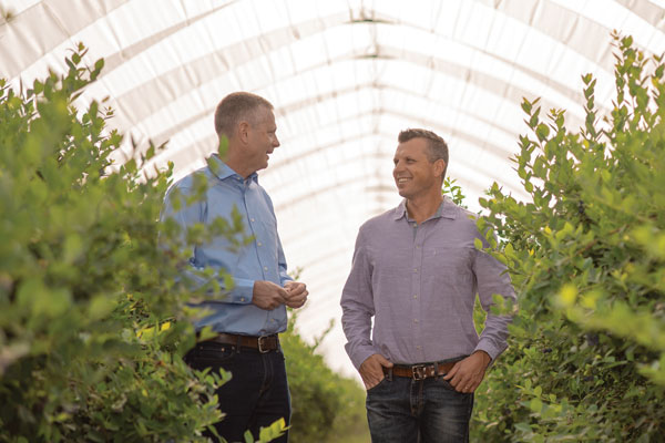 (left) Scott Mabs, CEO; and (right) Chad Hansen, Blueberry Category Director, of Homegrown Organic Farms, picking fresh blueberries