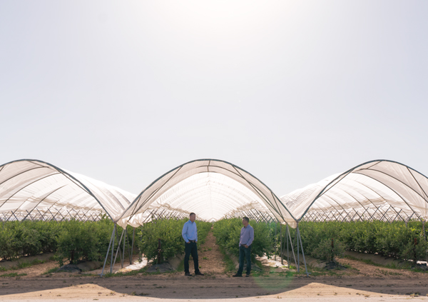 (left) Scott Mabs, CEO; and (right) Chad Hansen, Blueberry Category Director, of Homegrown Organic Farms, outside the sheltered blueberry rows