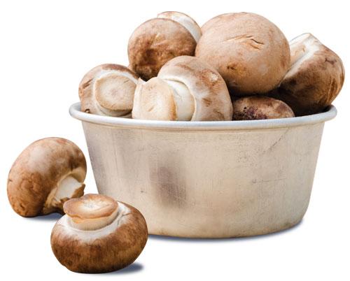 Mushroom Pile