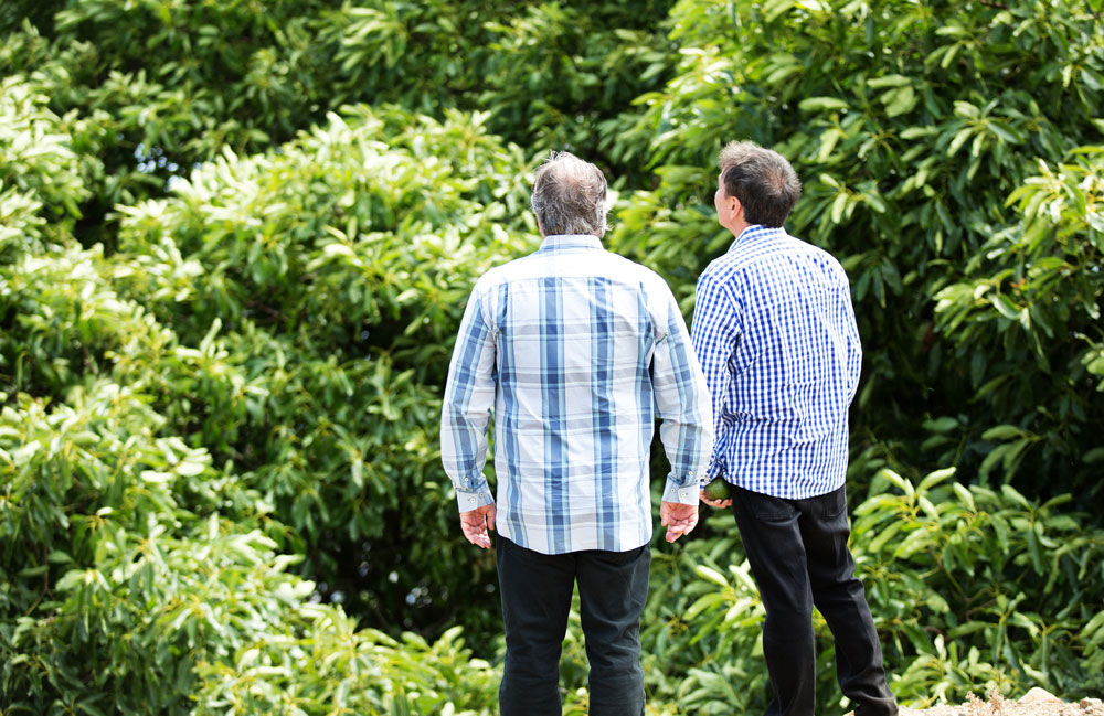Randy Shoup (left) and Galen Newhouse (right) looking over the avocado trees