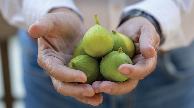 Catania Worldwide grows figs and more out of its Maple Leaf Ranch and Mexico locations