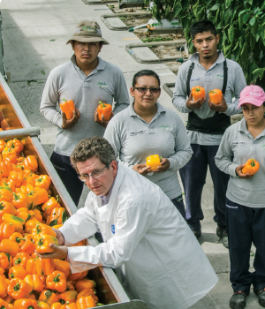 Oscar Woltman working with his team at FreshMex's Querétaro greenhouse