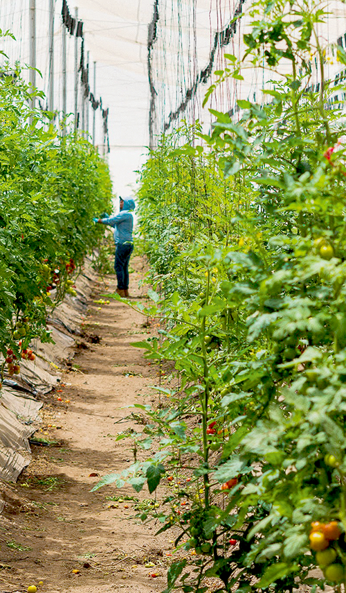 Jacobs Farm del Cabo adds value to its product line by cultivating popular and uncommon herbs and vegetable varieties