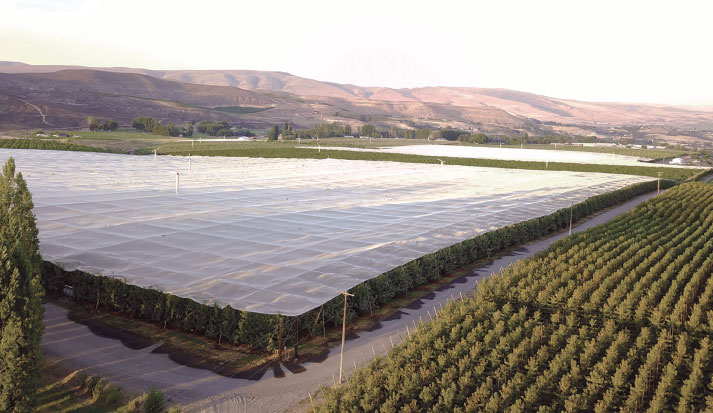 A Rainier Fruit Company orchard in Central Washington