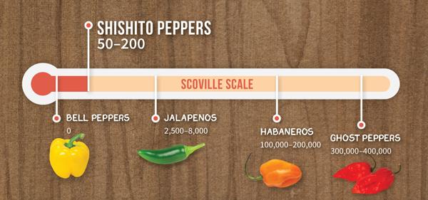 Shishito Pepper Schoville Scale
