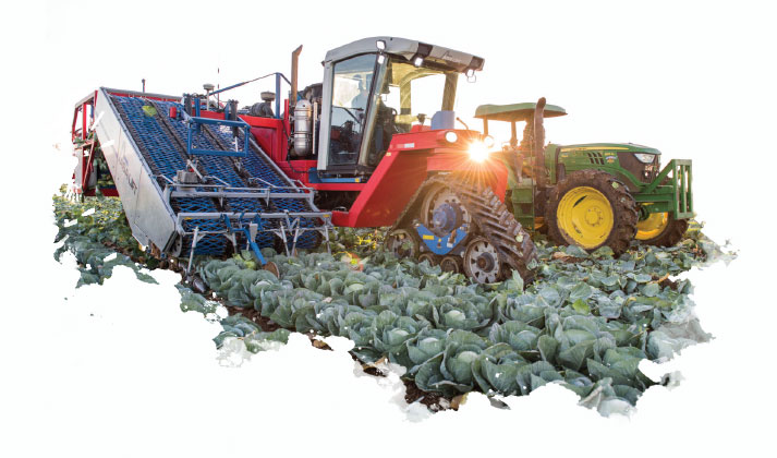 Taylor Farms' Automated Cabbage Harvester