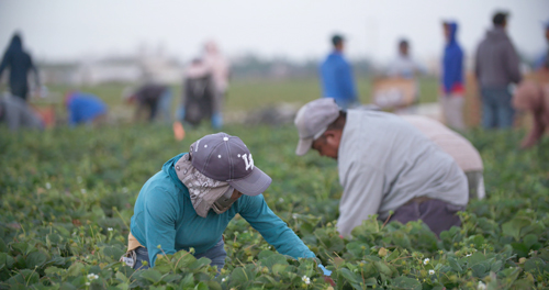 Despite being one of our most celebrated and coveted resources, the produce industry at large is facing a labor crisis unlike any before