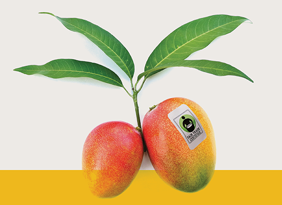 Set Your Course By the Mango