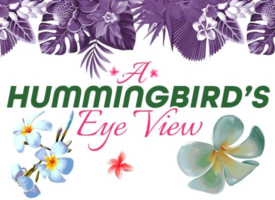 A Hummingbird's Eye View